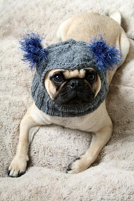 Snuggly Pug Alien Hat