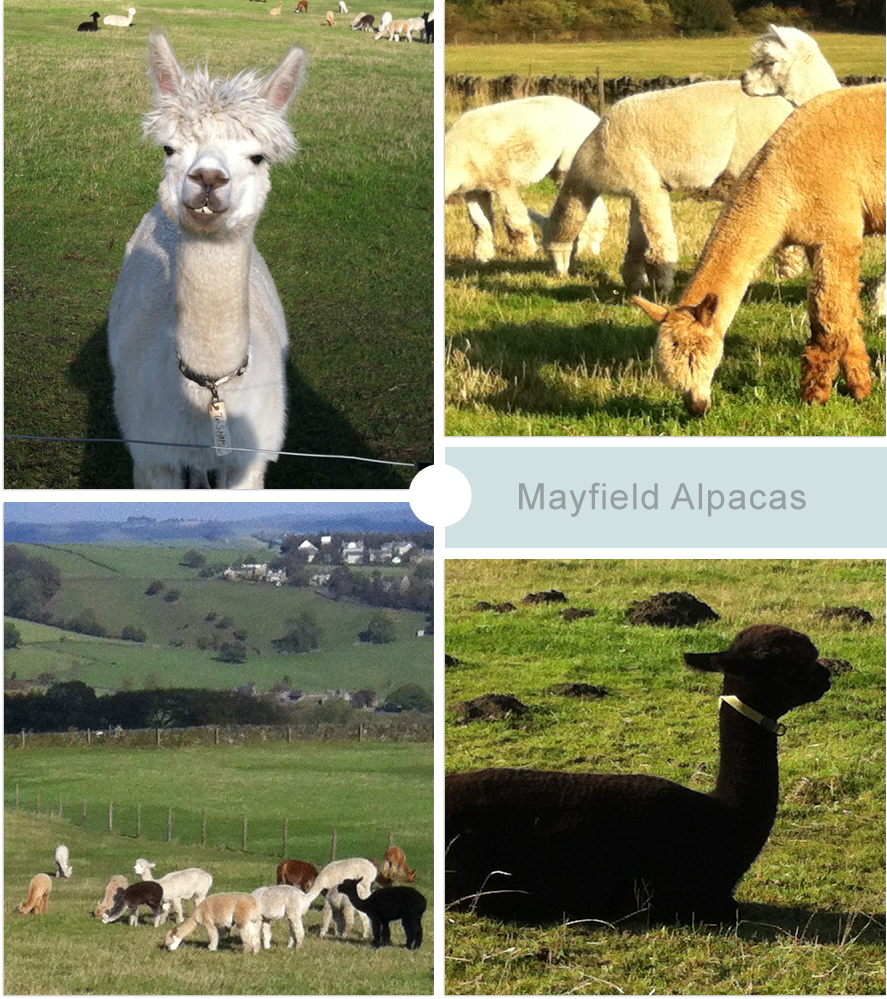 Mayfield Alpacas