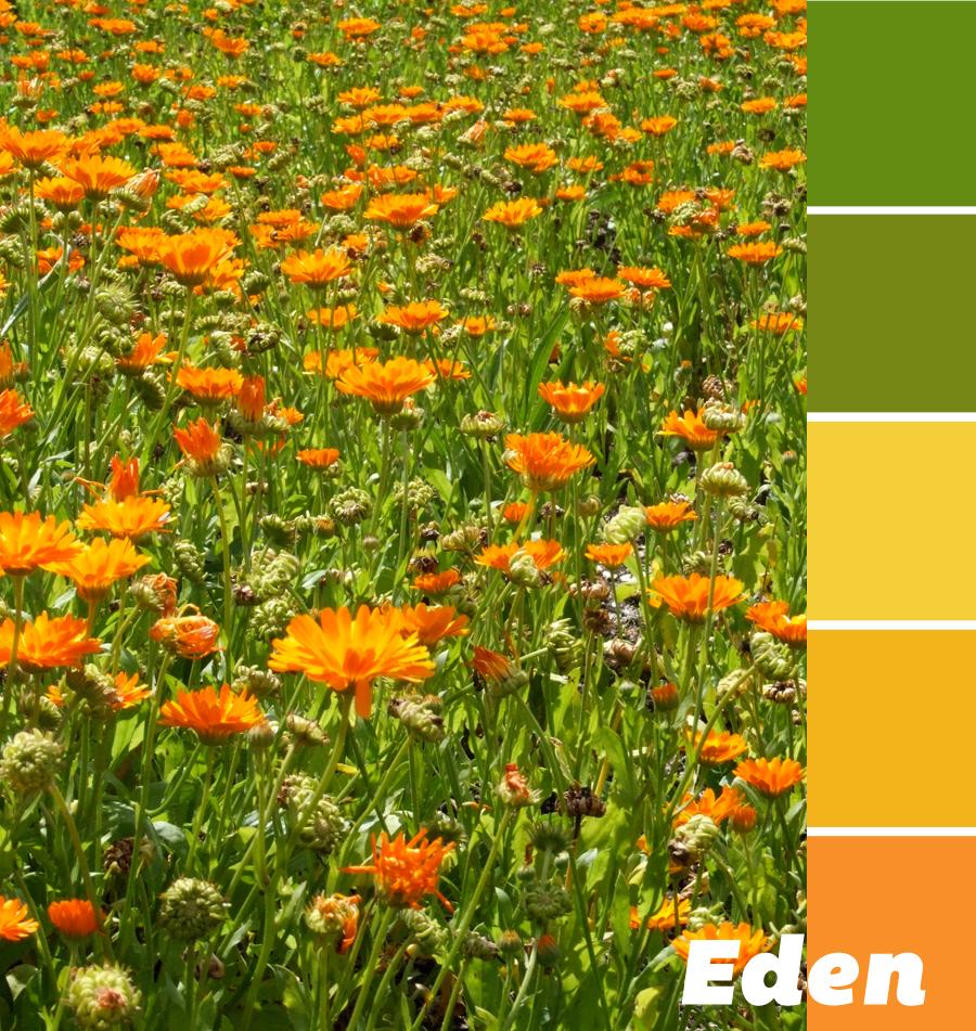 Eden-Flowers